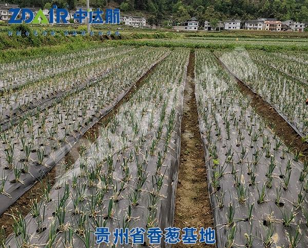 贵州省香葱基地