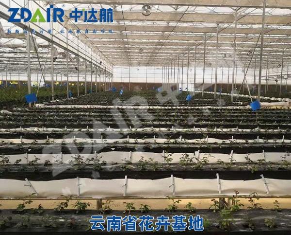 云南省花卉基地