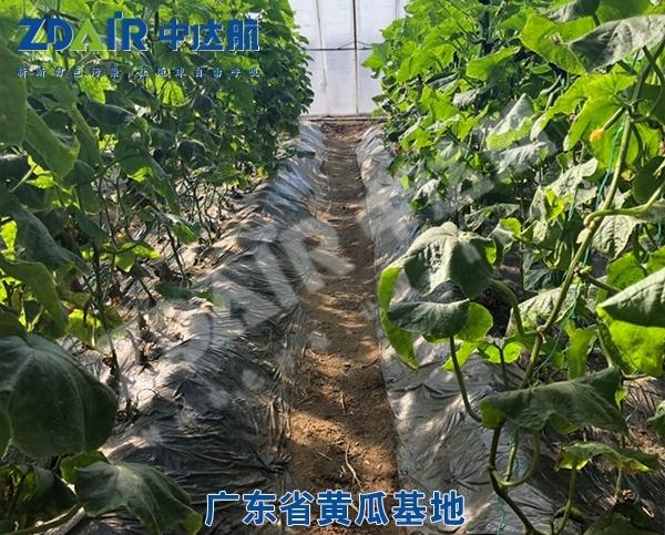 广东省黄瓜基地
