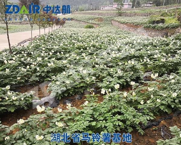 湖北省马铃薯基地