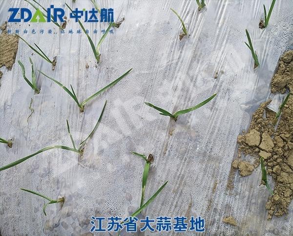 江苏省大蒜基地