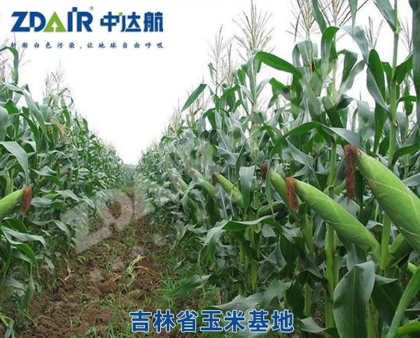吉林省玉米基地