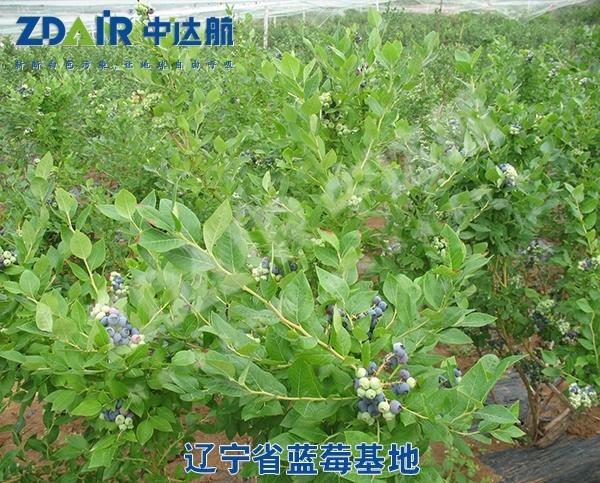 辽宁省蓝莓基地